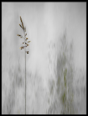 Buy this art print titled Blade of Grass by the artist Gilbert Claes