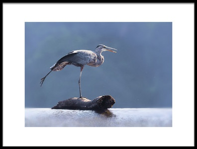 Art print titled Blue Heron Doing Yoga by the artist Purple Bamboo