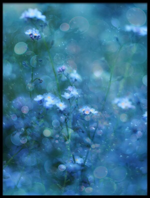 Buy this art print titled Blue Serenity by the artist Delphine Devos