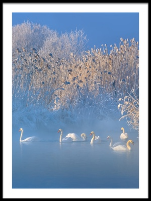Buy this art print titled Blue Swan Lake by the artist Hua Zhu