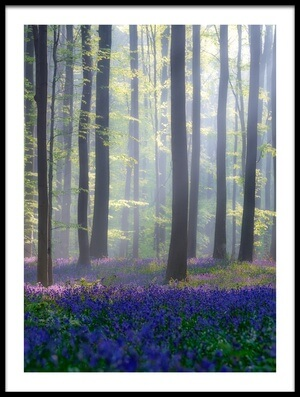 Art print titled Bluebells by the artist Adrian Popan