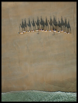 Buy this art print titled Broome Camel Train by the artist Renee Doyle