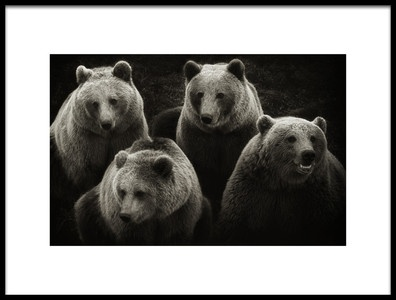 Art print titled Brown Bears by the artist Marianne Siff Kusk
