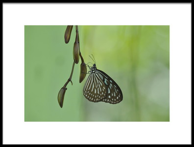 Art print titled Butterfly by the artist Leroux Alain