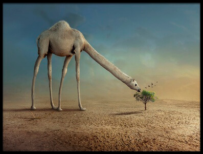 Buy this art print titled Camel and Tree by the artist sulaiman almawash