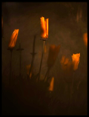 Buy this art print titled Candle Light by the artist Fabien BRAVIN