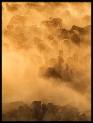 Art print titled Cappadocia Wild Horses by the artist Dan Mirica