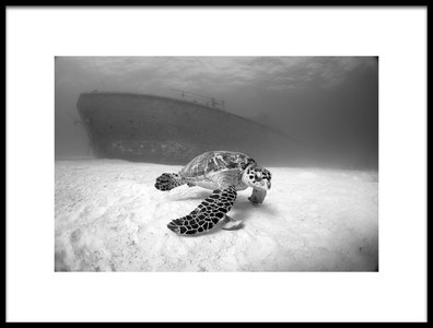 Art print titled Captain Keith Tibbetts Wreck Cayman Brac by the artist natalia martin de pablos