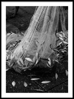 Buy this art print titled Catch of the Day by the artist Inge Schuster
