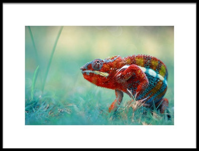 Art print titled Chameleon Phanter by the artist andri priyadi