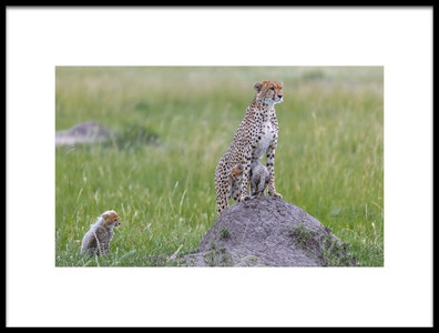 Art print titled Cheetah and Cubs by the artist Roshkumar