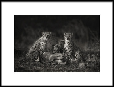 Buy this art print titled Cheetah Cubs by the artist Mario Moreno