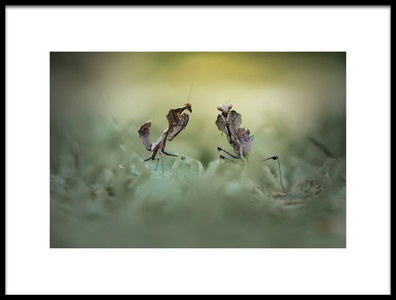 Buy this art print titled Cobra Mantis by the artist andri priyadi