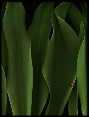 Art print titled Coccinelle by the artist jeffrey hummel