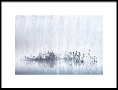 Art print titled Cold Amp Foggy Morning In the Swamp by the artist David Frutos