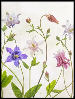 Buy this art print titled Columbine by the artist Mandy Disher