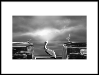 Buy this art print titled Comtemplating the Pelican by the artist LARRY BUTTERWORTH