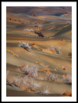 Buy this art print titled Coppice In Desert by the artist Babak Mehrafshar (Bob)