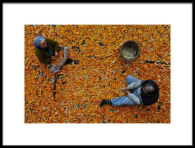 Buy this art print titled Corn by the artist Mustafa Zengin