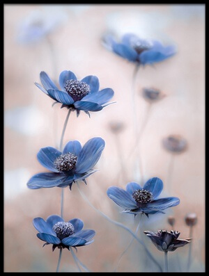 Buy this art print titled Cosmos Blue by the artist Mandy Disher