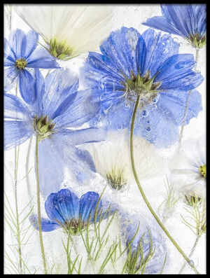 Art print titled Cosmos Blue by the artist Mandy Disher