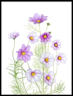 Art print titled Cosmos Comfort by the artist Mandy Disher