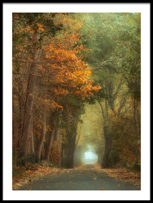 Buy this art print titled Country Road by the artist Anton van Dongen