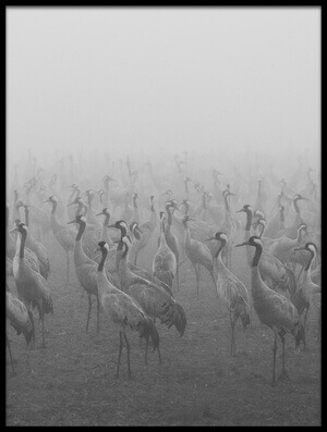 Buy this art print titled Cranes by the artist keren or