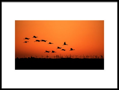 Art print titled Cranes and Wind Farm by the artist  Hao Jiang