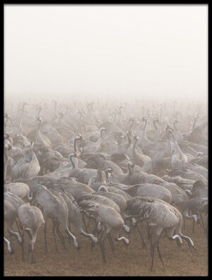 Buy this art print titled Cranes II by the artist keren or