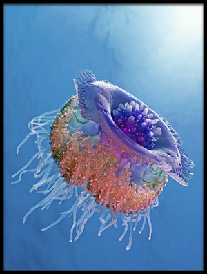 Buy this art print titled Crown Jellyfish by the artist Henry Jager