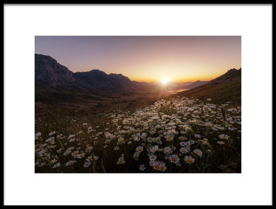 Art print titled Daisies Fields Forever by the artist Sergio AbeVilla