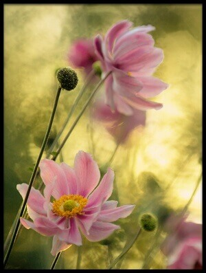 Buy this art print titled Dance of the Flowers by the artist Steve Moore