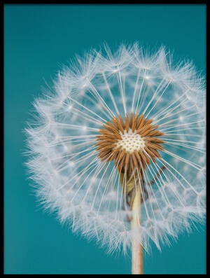 Buy this art print titled Dandelion by the artist Bess Hamiti