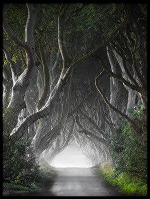 Buy this art print titled Dark Hedges by the artist Nicola Molteni