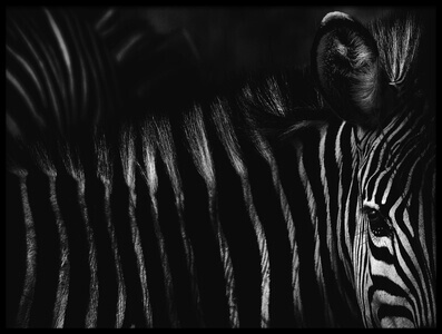 Art print titled Dark Zebra by the artist Antonio Grambone