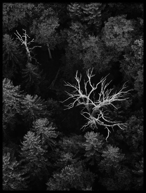 Art print titled Dead Trees by the artist Emil Licht