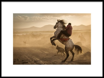 Buy this art print titled Dealing With Wild Horses of Cappadocia by the artist Dan Mirica