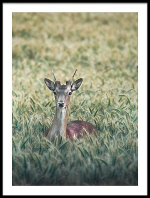 Buy this art print titled Deer In Field by the artist Christian Lindsten