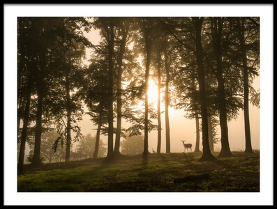 Art print titled Deer In the Morning Mist by the artist Leif Løndal