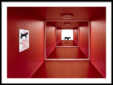 Art print titled Dog On the Loose by the artist Jacqueline Hammer