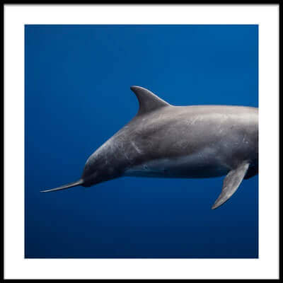 Art print titled Dolphin by the artist Barathieu Gabriel