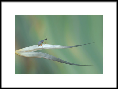 Art print titled Dragon Hunter by the artist Thierry Dufour