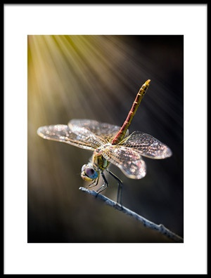 Art print titled Dragonfly 3 by the artist antonio zoccarato