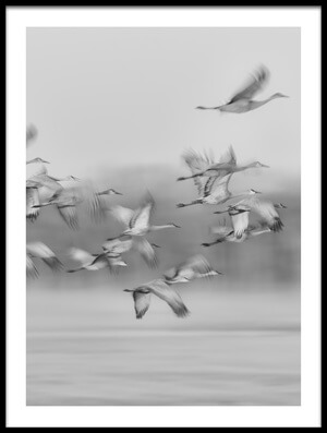 Buy this art print titled Dream Flight by the artist Kevin Wang