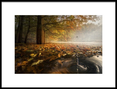 Art print titled Drops Between the Autumn Colors by the artist Alberto Ghizzi Panizza