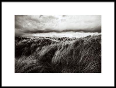 Art print titled Dunes of Grass by the artist Paul