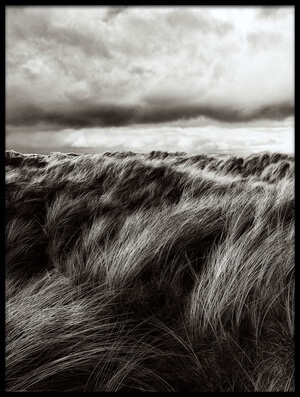 Buy this art print titled Dunes of Grass by the artist Paul