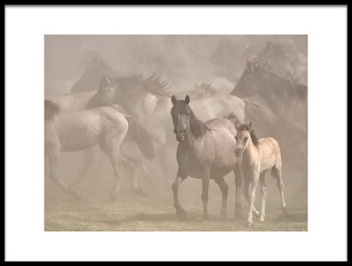Buy this art print titled Dusty by the artist Martin Groth