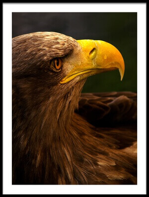 Buy this art print titled Eagle Pursues Prey by the artist Adriana K.H.